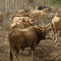 Salaire moyen et salaire minimum coopératives bétail et viande