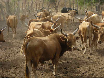 Grille et salaire minimum coopératives bétail et viande 2012