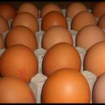 Grille et salaire minimum œufs 2012 / 2013 conventionnel