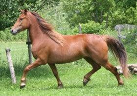 Barème salaires, salaire moyen et salaire minimum entraînement chevaux de courses au trot 2010