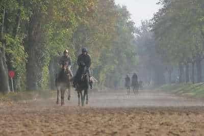 Grille et salaire minimum entraînement chevaux de courses au trot 2010