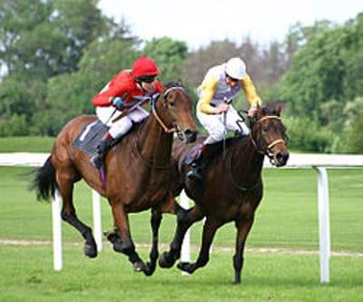 Grille et salaire minimum entraînement chevaux de courses au galop 2012