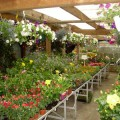 Salaire minimum jardinerie 2013