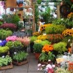 Grille et salaire minimum fleuriste 2014