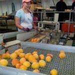 Barème salaires, salaire moyen et salaire minimum des 5 branches industries alimentaires diverses en 2014