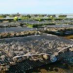 Grille des salaires 2015 de la conchyliculture