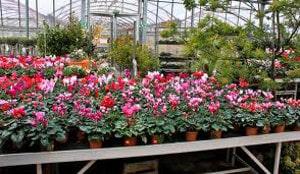 Barème salaires, salaire moyen et salaire minimum jardinerie 2016