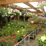 Grille et salaire minimum jardinerie 2016 et 2017 conventionnel