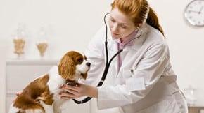 Barème salaires, salaire moyen et salaire minimum vétérinaire 2016