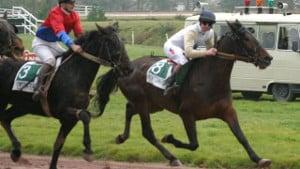 Barème salaires, salaire moyen et salaire minimum entraînement chevaux de courses au trot 2014