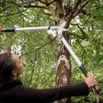 Modèle de courrier de demande de coupe des branches d'un arbre