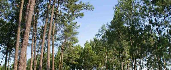 Grille des salaires 2019 de l'industrie du bois de pin maritime de Gascogne 2019 - Cadres