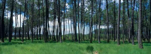 Barème salaires, salaire moyen et salaire minimum industrie du bois de pin maritime de Gascogne 2019 – Act