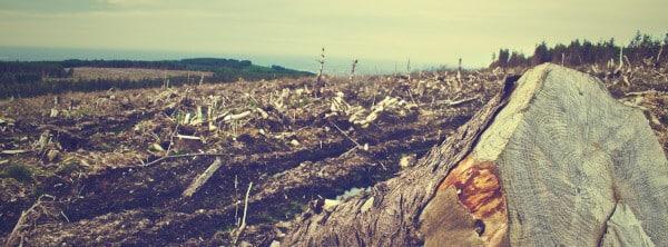 Réforme de la justice de l'environnement en 2020